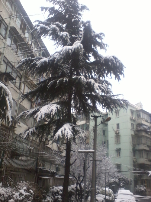 snowy apartment complex in Shanghai