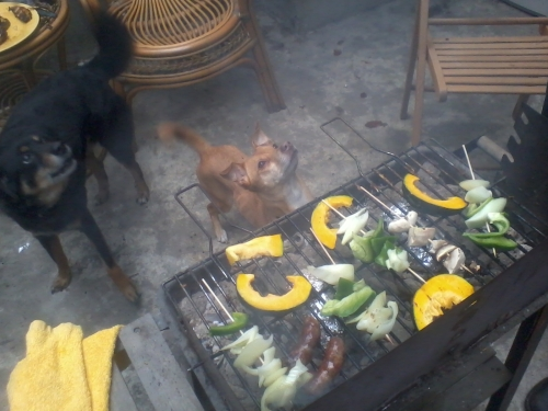 the dogs look longingly for some food from the bbq grill